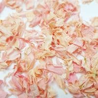 Delphinium Flower Petals - Church Bells